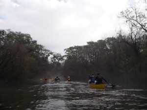 Georgia Conservancy paddlers heading up the backwaters of the flooded Altamaha