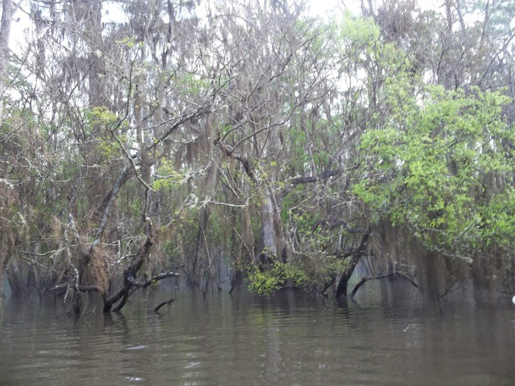 The Altamaha was at flood stage during the Georgia Conservancy paddle