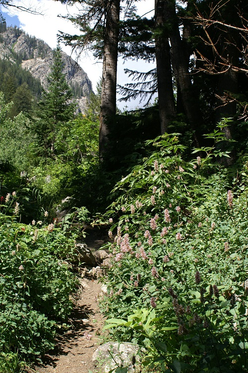 Granite Canyon Trail turns to forest in Grand Teton