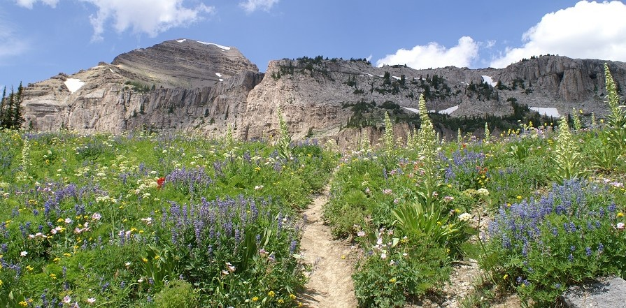 The trail runs through the wildflowers in Grand Teton NP