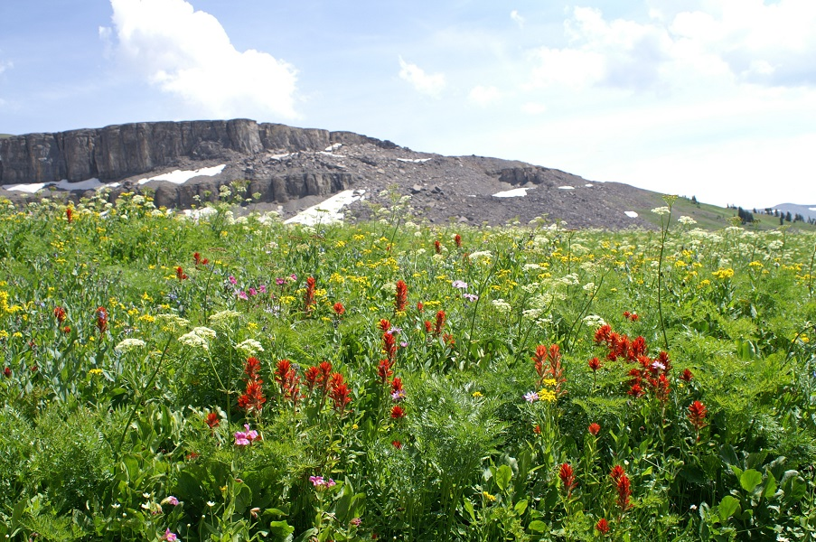 Wildflowers along the Teton Crest Trail